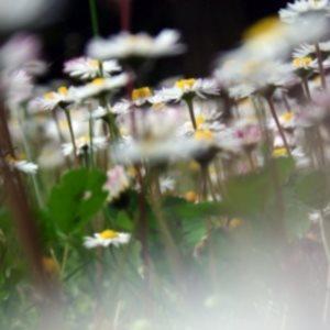 poster con i fiori