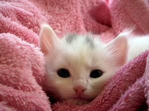 gatto in arrivo