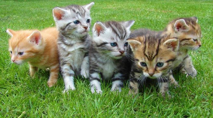 consigli-giardinieri-gatti